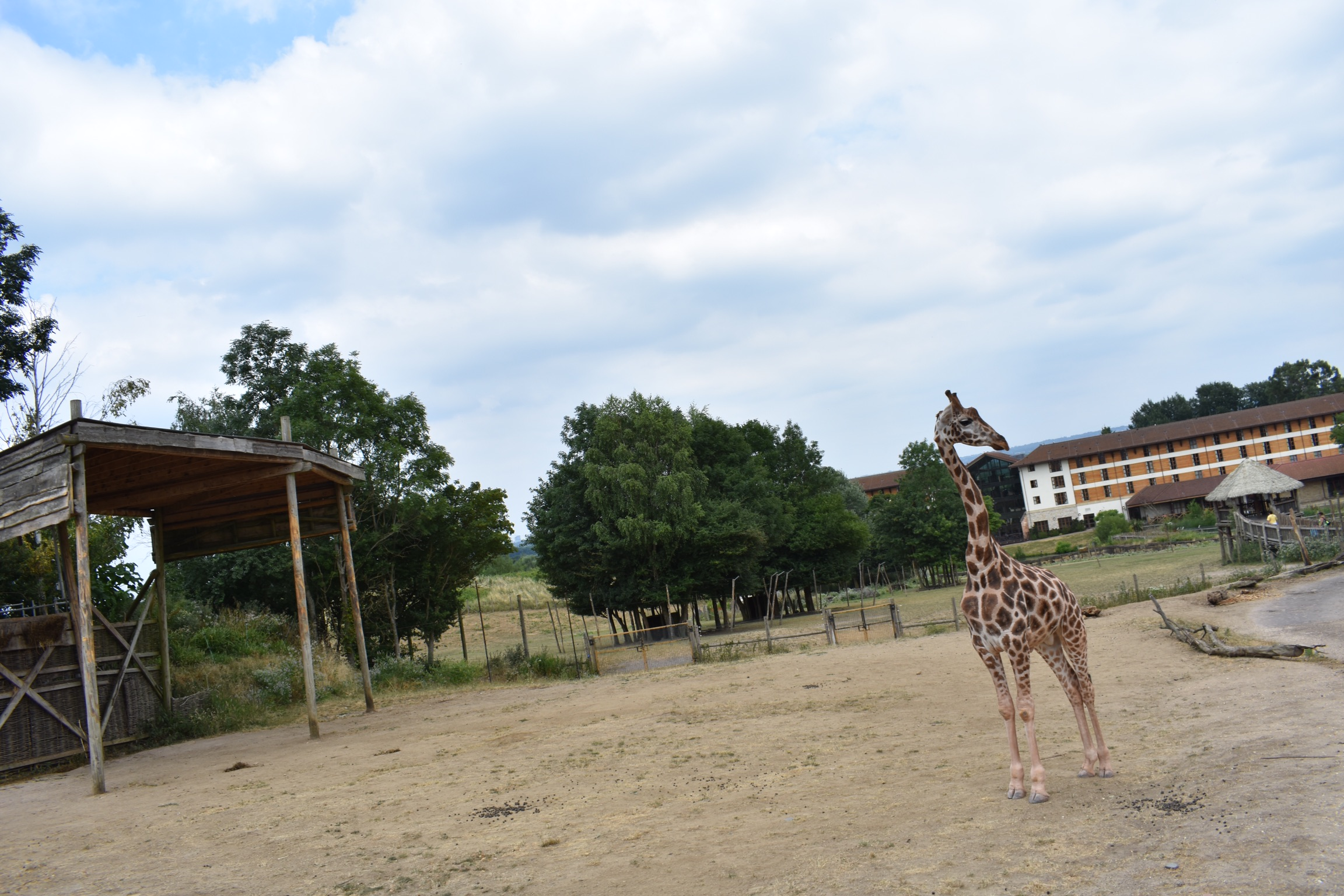 VIP Giraffe Feed  – Chessington World of Adventures: Throwback Review.